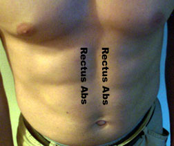 Rectus abs