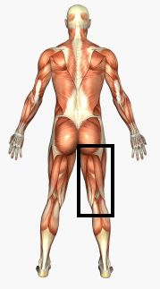 anatomy of human body picture