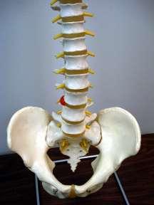 back stretching exercise image